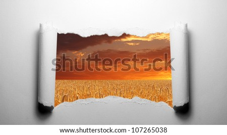 Torn paper with wheat field landscape - stock photo