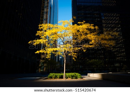 Toronto, Canada - Fall scene in the city, alone tree on a urban background, nature and urbanisation