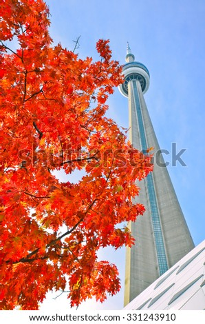 Toronto, Canada - October 15 : View of red maple tree and CN Tower in autumn on October 15, 2013 in Toronto.  - stock photo