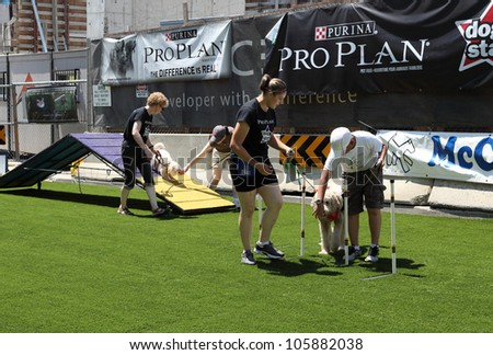 TORONTO - JUNE 10: Dog trainers take owners and their pets through an obstacle course on June 10, 2012 in Toronto. The course was set up for Woofstock, an annual outdoor festival for dogs. - stock photo