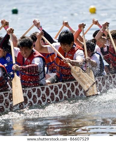 TORONTO - JUNE 21: University of Toronto's Victoria College Paddling Club Dragon Boat racing at the 21st TELUS Toronto Dragon Boat Racing Festival at Toronto Island, June 20, 2009 Toronto, Canada - stock photo