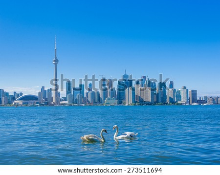 Toronto skyline with a couple of swans - stock photo