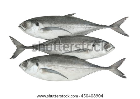 Torpedo scad fish or finletted mackerel scad isolated on white background