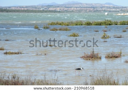 TORREVIEJA, SPAIN - APRIL 4, 2014: Natural Park of La Mata is located in the Mediterranean city of Torrevieja. The territory of the park allows you to watch the flora and fauna of the salt lagoons.