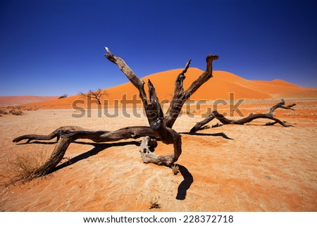 torso dry tree in front of dune number 4 Sossusvlei, Namibia - stock photo