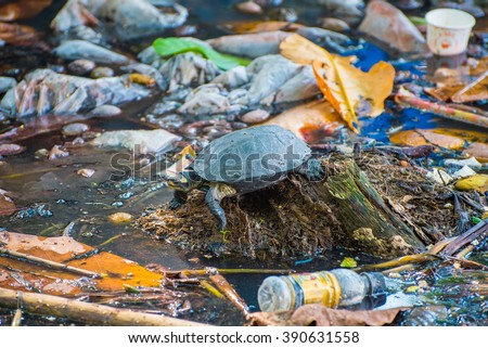 Tortoise surrounded by polluted water. Photo made in Kochi city, Kerala, India - stock photo