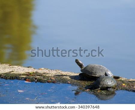 tortoise taking sunbath - stock photo
