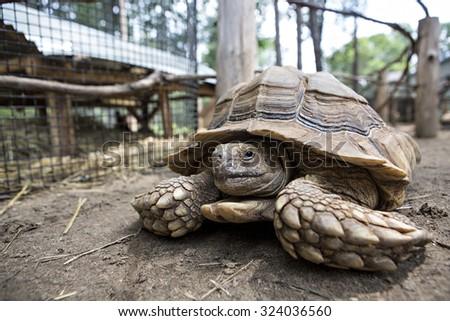 Tortoise turtle closeup - stock photo