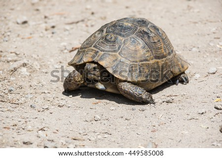 Tortoise walking on the path at sunny day