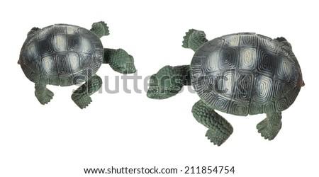 Tortoises on White Background - stock photo