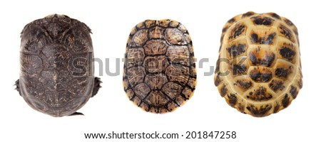 Tortoiseshell on white - stock photo