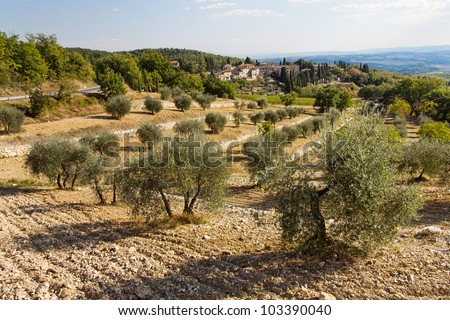 Toscana landscape with olive trees in foreground in Tuscany, Italy - stock photo