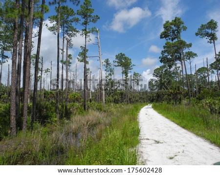 Tosohatchee Wildlife Management Area in Florida - stock photo