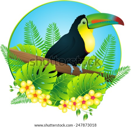 toucan - stock photo