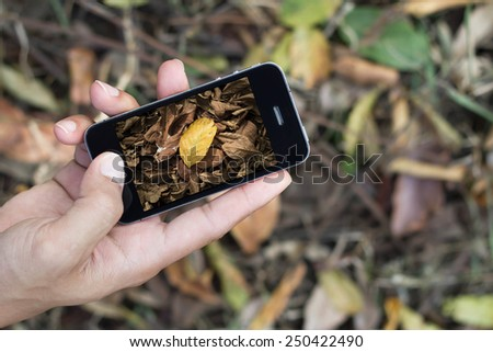 Touch screen mobile phone, in hand taking Brown fallen leaves - stock photo