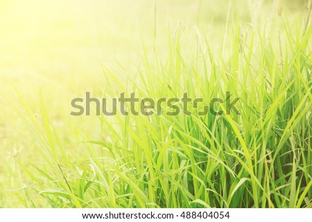 Touching green grass at makes feeling of soft nature. Adjustment  beautiful color image and soft focus style.