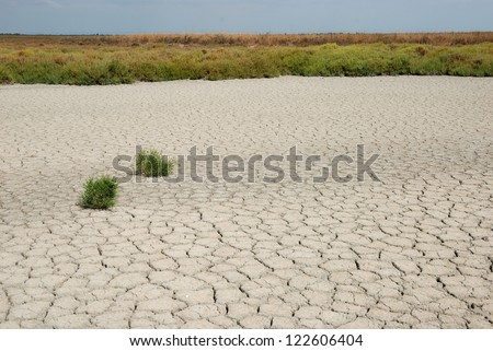 Tough bushes surrounded by dry soil - stock photo
