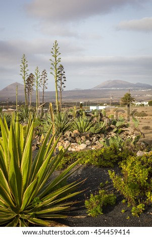 Tourist destination Canary Islands. View on the volcanic island Lanzarote from the village Teguise.