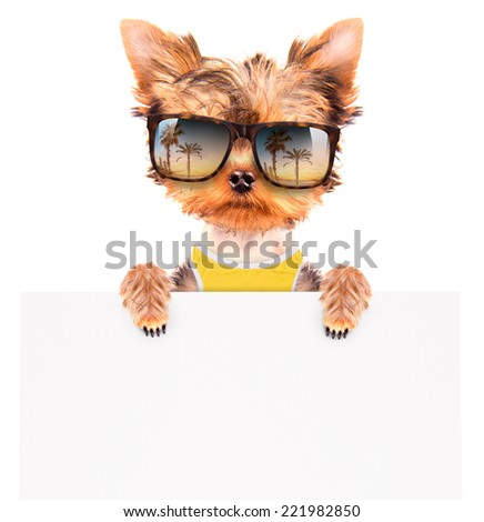 tourist dog holding a white paper banner - stock photo
