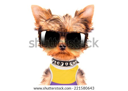 tourist dog isolated on a white background
