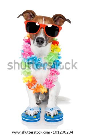 tourist dog with hawaiian  lei and shades - stock photo