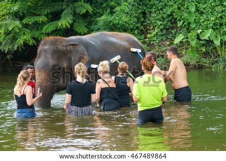 Elephant Bathing Stock Images Royalty Free Images