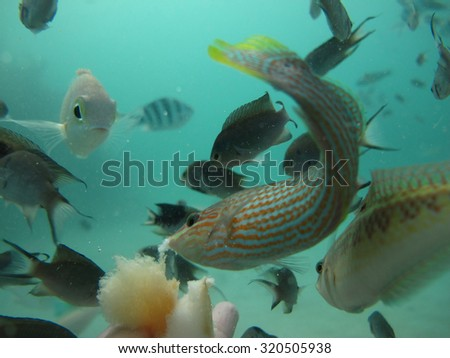 Tourist feeding fish with bread under the sea.