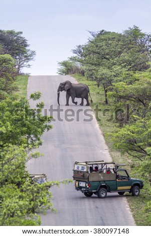 Tourist in jeep safari looking african elephant in Kruger national park, South Africa - stock photo