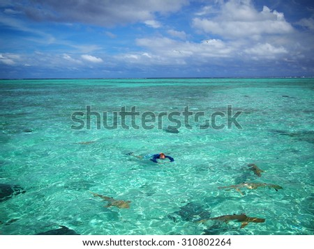 Tourist in sun protective swimwear snorkeling with sharks and stingrays in the shallow water of the lagoon of Bora Bora, a tropical island near Tahiti in French Polynesia in the Pacific Ocean. - stock photo