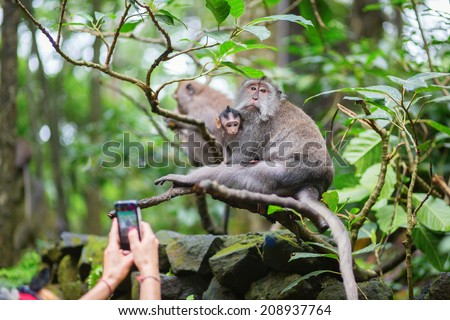 Tourist taking picture of monkey family in the Monkey forest of Ubud, Bali - stock photo