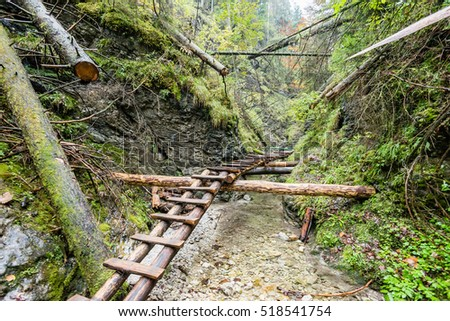 tourist trail in misty woods with boardwalks and rocks for climbing