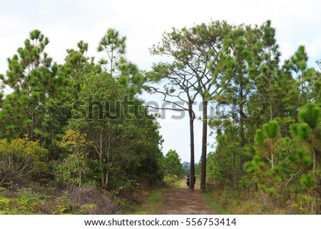 Tourist walking on the natural road in the tropical forest.