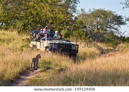 Tourists observing a female leopard, South Africa - stock photo