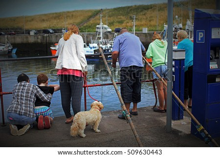 Tourists watching and feeding seals in Eyemouth in Scotland. 07.08.2015