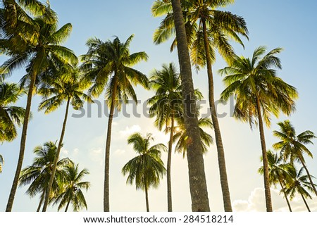 Towering coconut trees against blue sky and sunrise