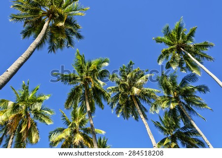 Towering coconut trees against cloudless blue sky - stock photo