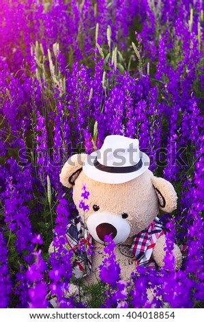 Toy bear in the big beige box garden with colorful lilac flowers.