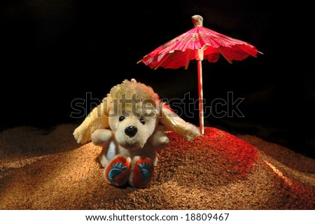 Toy poodle on sea-beach background. Photograph is made in lightbrush technique. Low-key lighting. - stock photo