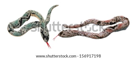 Toy Snakes on White Background