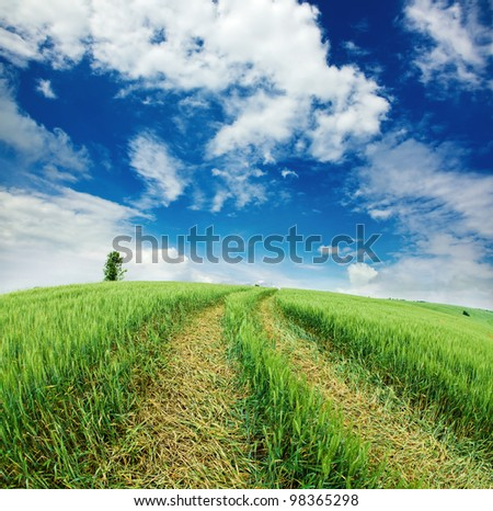 trace the car to cultivated wheat field - stock photo