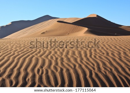 traces in the desert sand