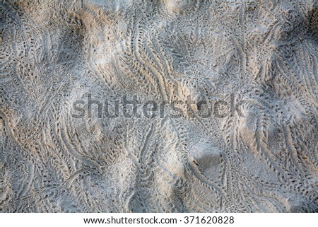traces of lizards in the sand as a background - stock photo