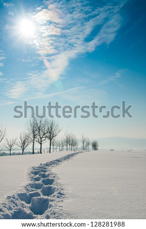 Traces on snow - stock photo