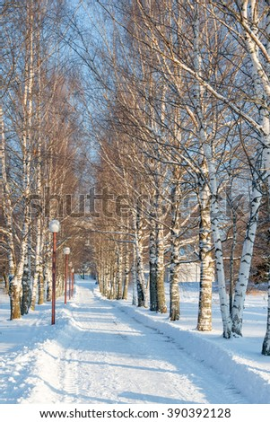 Track for the birch alley in a winter park - stock photo