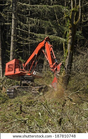 Track mounted forestry feller buncher cutting down down fir trees at a logging site in Oregon - stock photo