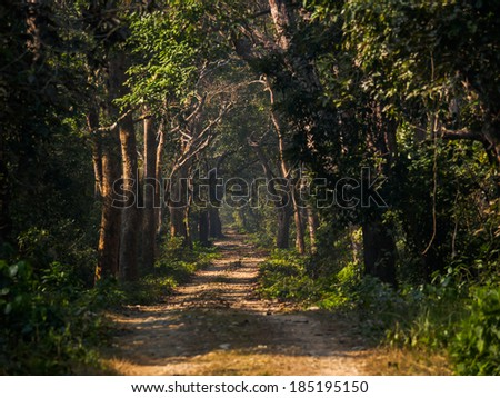 Track through riverine forest in Bardia National Park, Nepal - stock photo