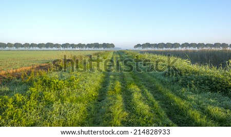 Tracks along a field at sunrise in summer