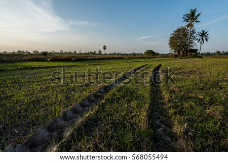 Tracks from heavy machinery in muddy farmland showing farming technics from around the world Asia.