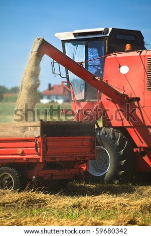 Tractor and combine harvesting wheat