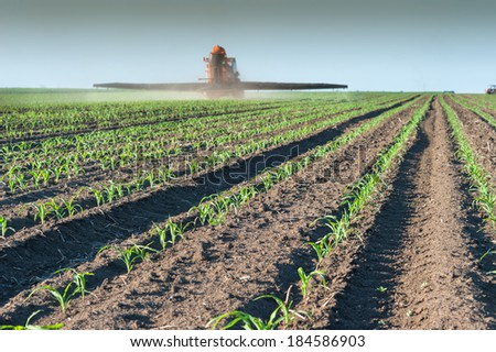 Tractor fertilizes crops corn in spring